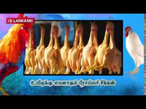 Broiler chickens- its harmful side effects tamil thumbnail
