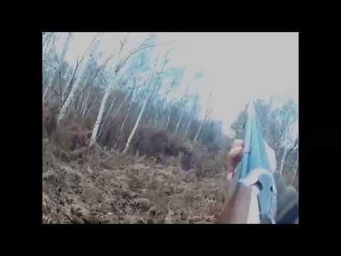 Saison de chasse 2013 2014 avec Gipsy setter anglaise de 2 ans et demi