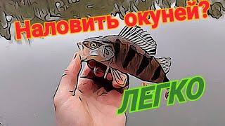 Ловля окуня в Киеве Как поймать окуня в черте города Весенняя рыбалка на хищника Киевский окунь