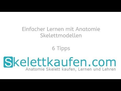 6 Tipps für effektives Anatomie Lernen mit einem Skelettmodell - YouTube