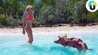 BAHAMAS 🐷🌴 Schwimmende Schweine, karibische Strände & mehr 😍🌴  | Guru on Tour