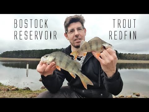 Bostock Reservoir Trout & Redfin Fishing Victoria