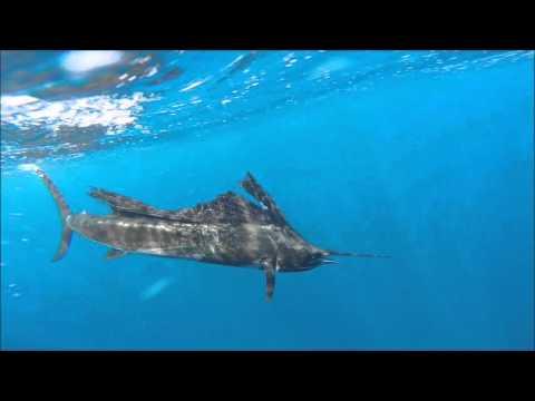 2015 Offshore World Championships - Costa Rica