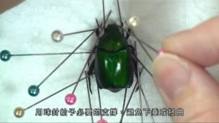 林業試驗所100年度專業技術影片_昆蟲標本製作技術