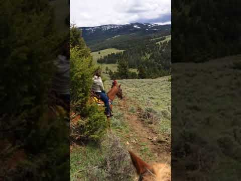 Horseback riding in Montana - Jake's horses