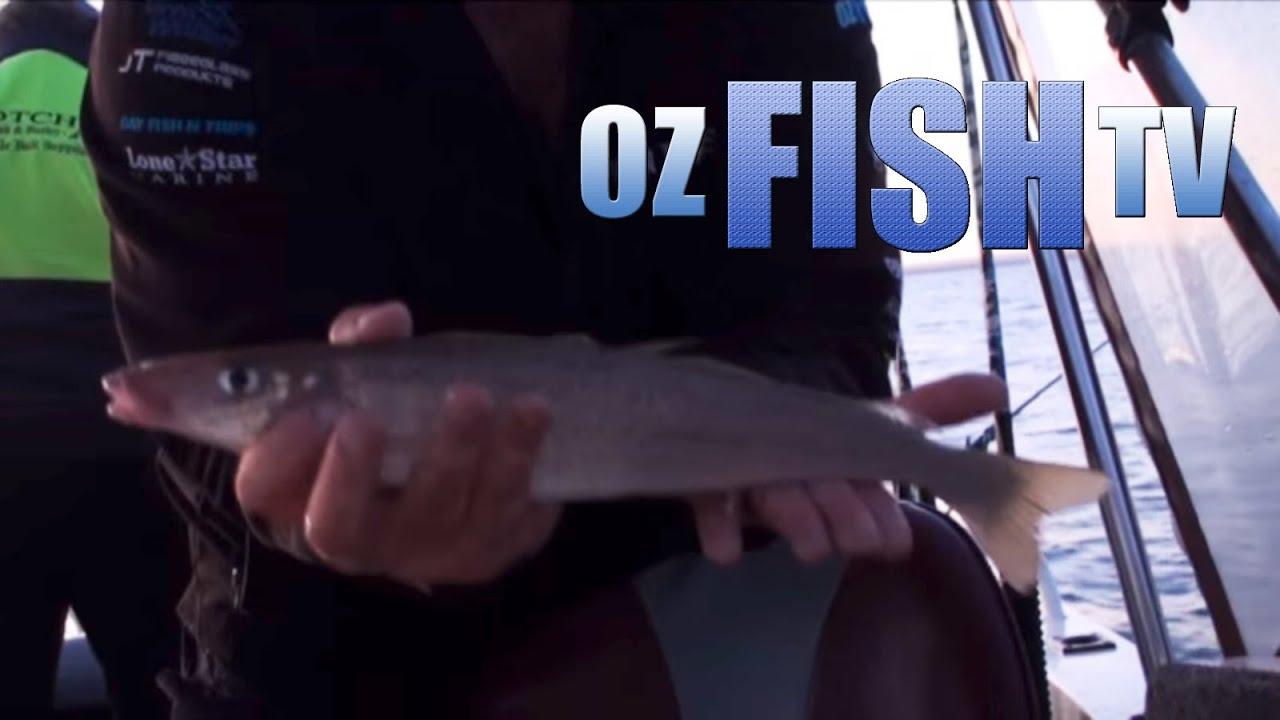 Download Oz Fish TV Season 3 Episode 9 - Westernport Whiting