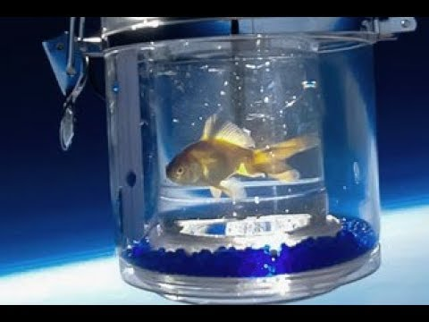 Sparkles the Goldfish Goes to Space