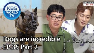 Dogs are incredible | 개는 훌륭하다 EP.35 Part 2 [SUB : ENG,CHN/2020.07.22]