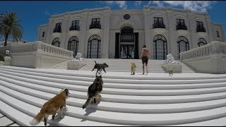 9 rescue dogs and a mansion