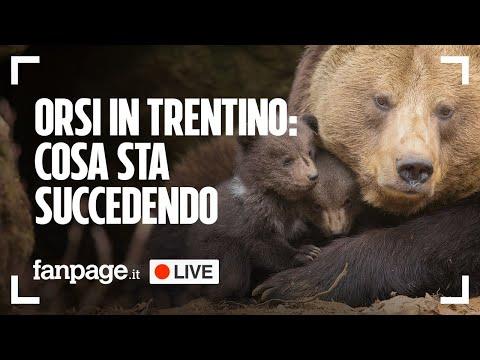Orsi in Trentino, cosa sta succedendo: ne parliamo col direttore di WWF Italia