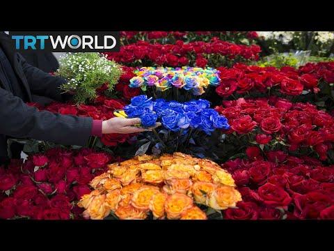 Money Talks: Turkey aims for $500M flower exports