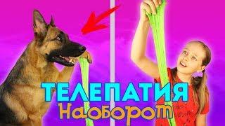 ТЕЛЕПАТИЯ НАОБОРОТ! / Собака управляет моим слаймом