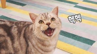 이 고양이는 웃고 있는게 아닙니다