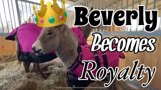 The Royal Beverly