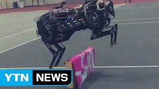치타 로봇, 눈을 달다…장애물 자동 인식 / YTN