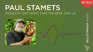 Mycelium Just Might Save the Bees, And Us – Paul Stamets – #624