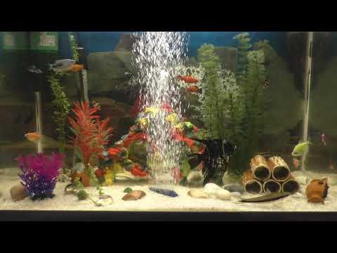 Аквариум с рыбками Видео FullHD