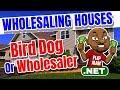 Wholesaling Houses for Newbies: Start As a Bird Dog or Wholesaler