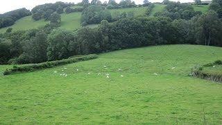 Pasture Restoration Using Mulch~Back To Eden Style