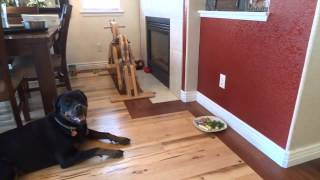 Rottweiler - Don't Eat My Food