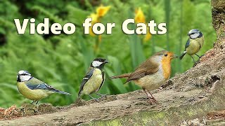 Videos for Cats : Birds & Squirrels Galore - 8 HOURS