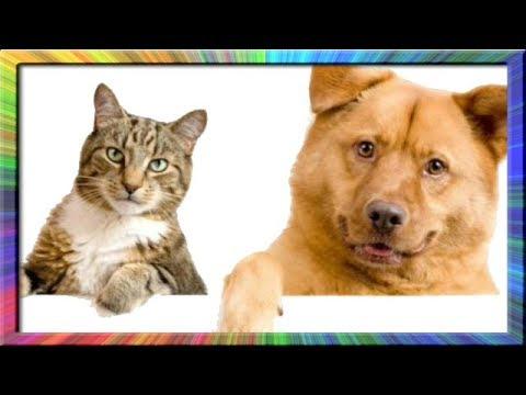 Gatos Chistosos - Perros Chistosos - Videos Graciosos #4