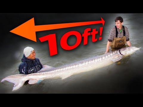 BIGGEST FISH WE'VE EVER CAUGHT ON FILM