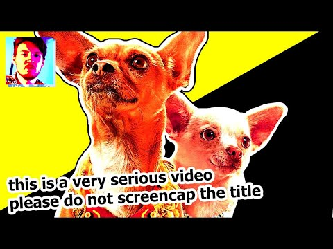The Political Implications Of Talking Dog Movies | Jack Saint