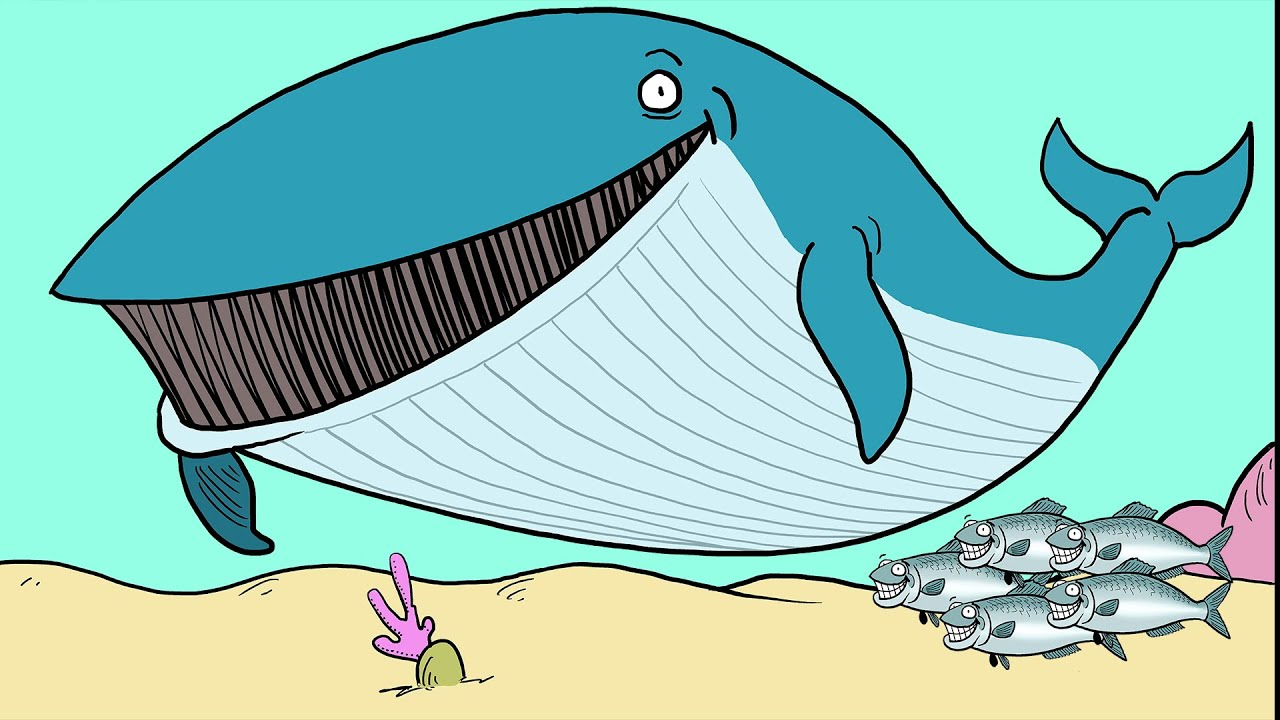 what is ecosystem based fishery management a cartoon crash