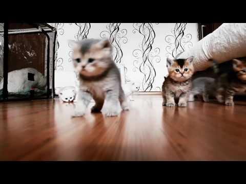 10 kittens part 2