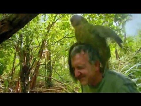 World famous frisky Kakapo given Government job