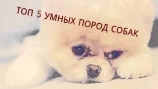 Собака- друг человека