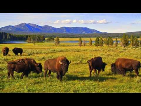 Yellowstone National Park- Quick look at the Top attractions video