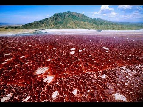Resultado de imagen de Lago Natron, Tanzania