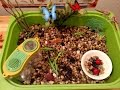 Insect Sensory Tub & Activities Preschool & Kindergarten Safari LTD