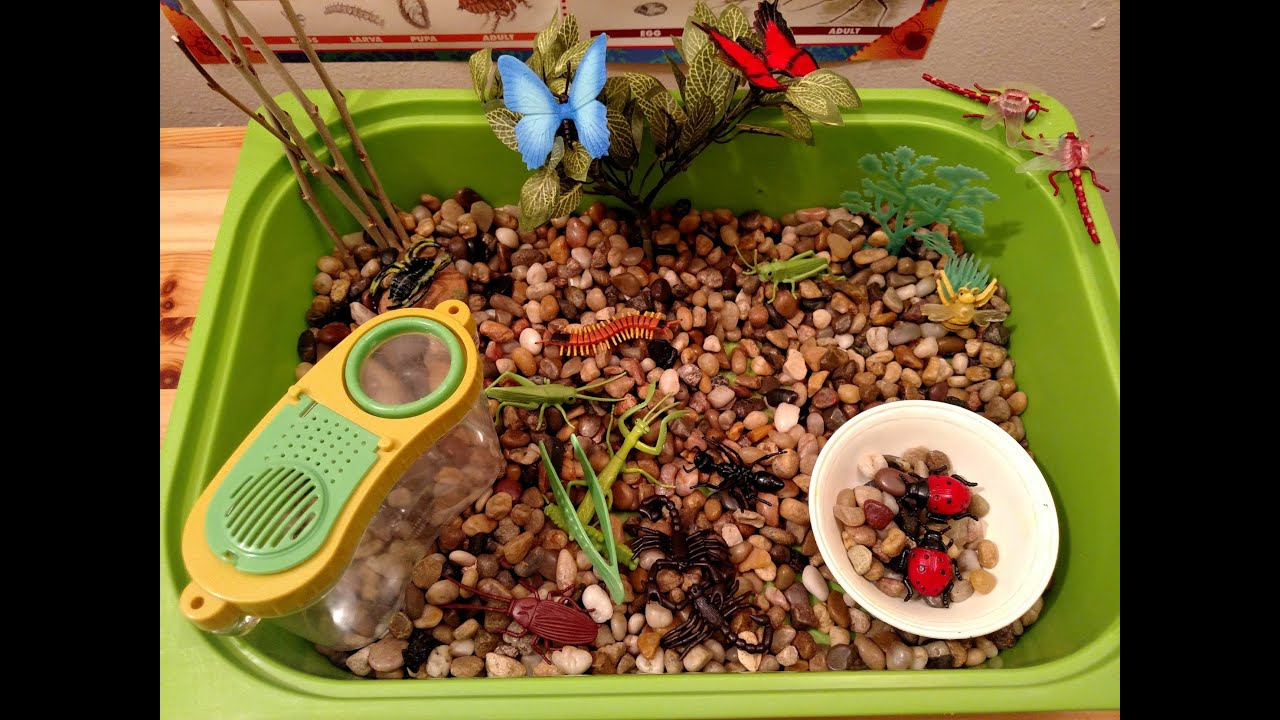 Insect Sensory Tub Amp Activities Preschool Amp Kindergarten