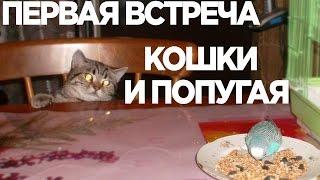 Первое знакомство, Попугай и кошка, Мура и борзый крылатый / Cat and Parrot