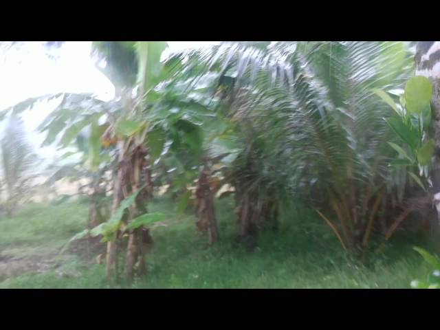 Monsoon Rain Kerala Malappuram
