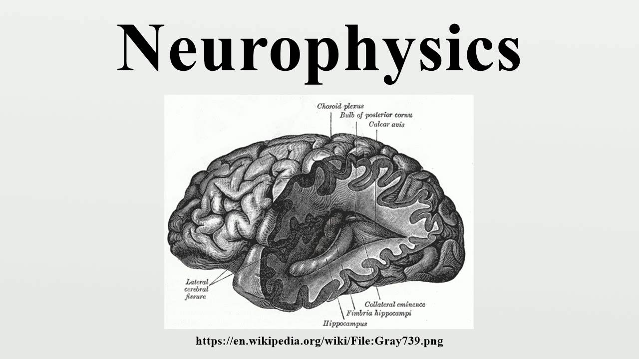 Neurophysics - YouTube