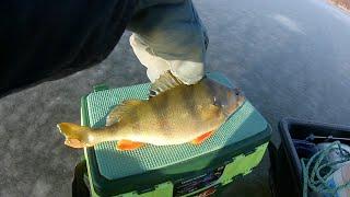 Первый лёд Три дня на озере Тростенское Зимняя рыбалка на жерлицы