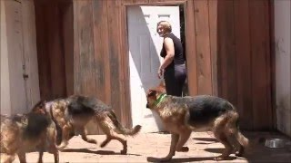 Teaching Dogs Not To Escape Doorways!