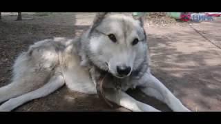 Социальный репортаж #1. База реабилитации животных в Кольцово
