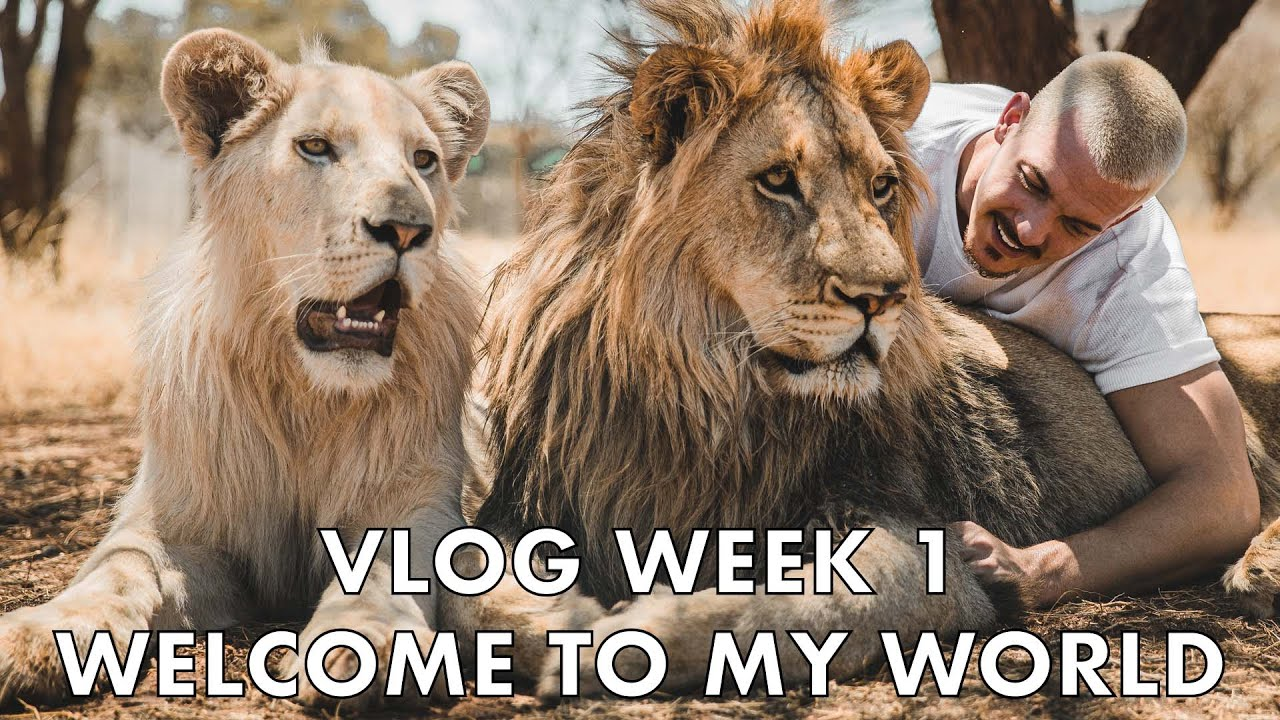Dean Schneider VLOG - Week 1 - Lion Pride, Rock Python Rescue, and more!