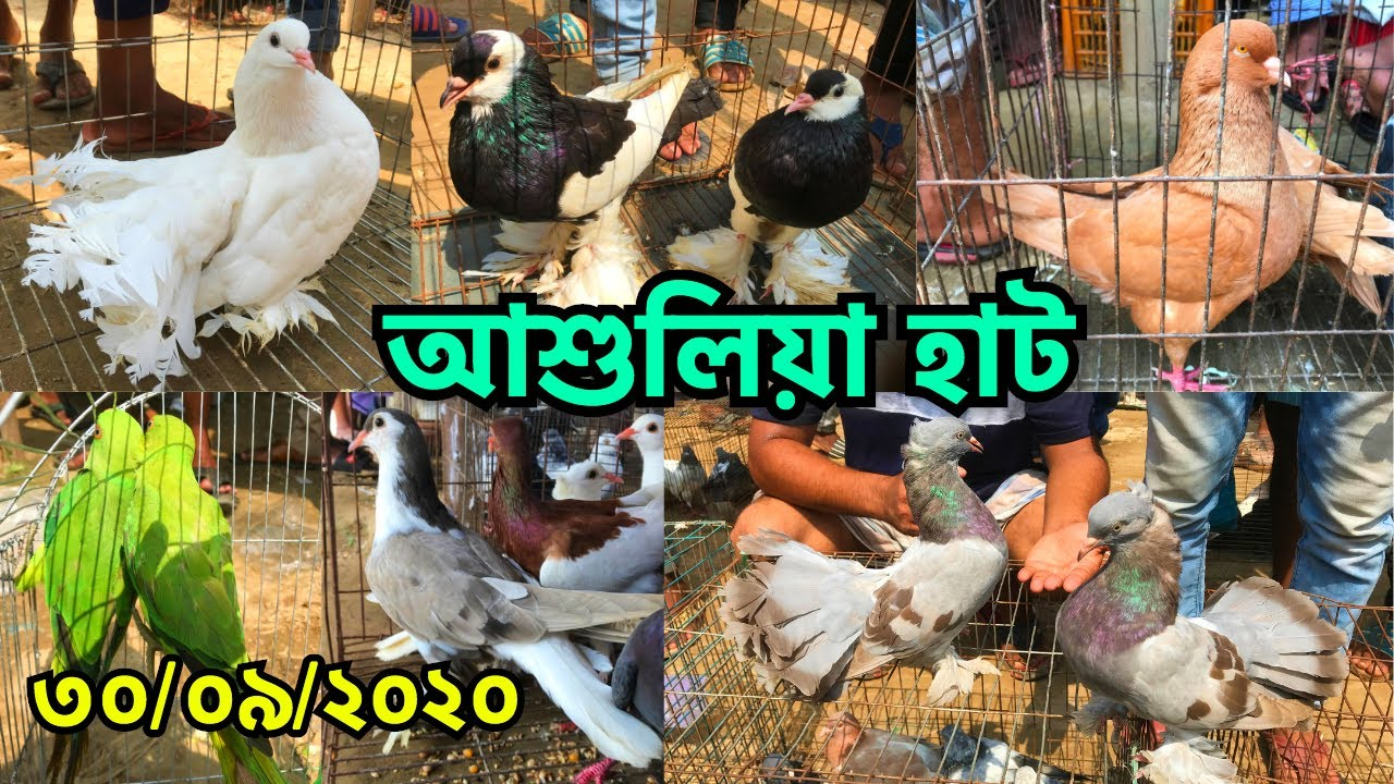 এক নজরে আশুলিয়া হাট থেকে পাখি ও কবুতরের দাম জেনে নিন | আশুলিয়া হাট || Ashulia Pet Market (V - 157)