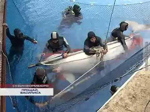 01.11.2016 Севастопольский дельфинарий попрощался с белухой