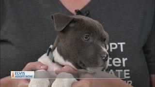 Pet Helpers: Elvis