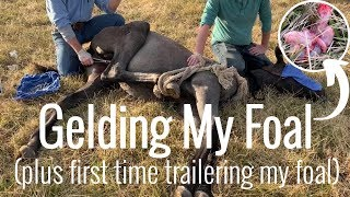 MY FOAL'S SURGERY | first time trailering