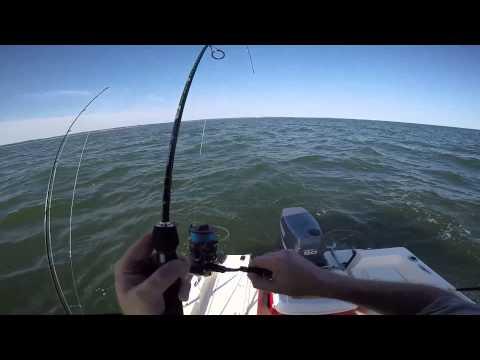 Porgy Fishing Long Island Sound