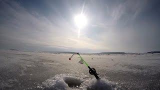 Ловля Корюшки в Приморске   Финский залив