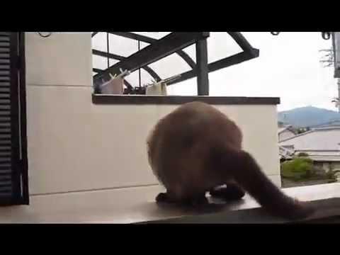 Падающие коты гифки